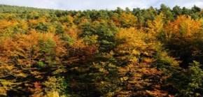 Quin bosc necessitem al segleXXI?
